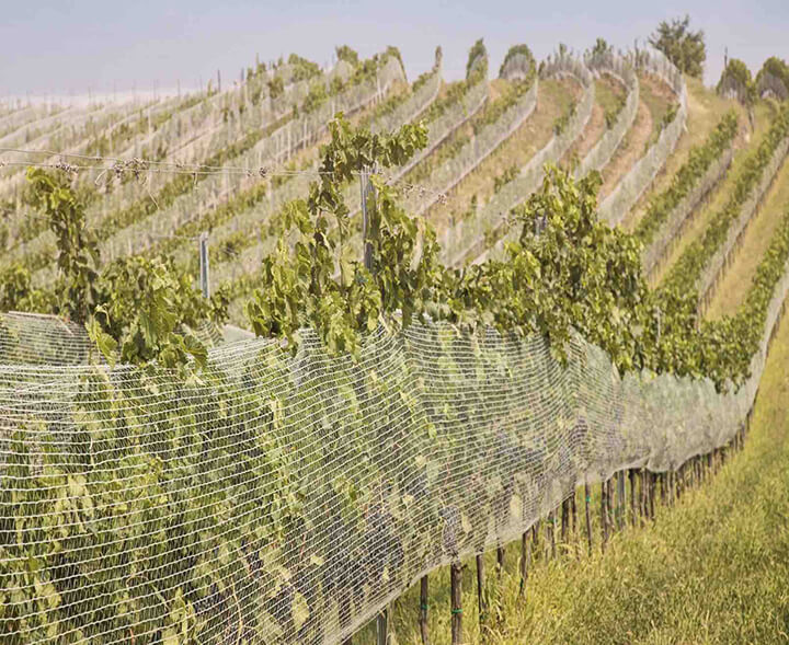 viticulture-nets